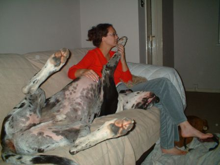 Great+dane+dog+house