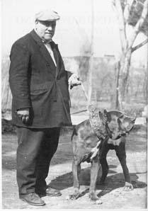 Мастино наполетано, или неаполитанский мастиф Neopolitan-Mastiff-Carlo-1950