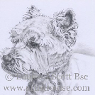 Ralph West higland terrier in pencil portrait 10x12