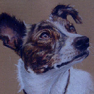 Beautiful lurcher Bonnie  Dog pastel portrait 12x16